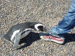 Did the Google Penguin Update Affect your Website?